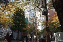 11.30東京駅小径.jpg